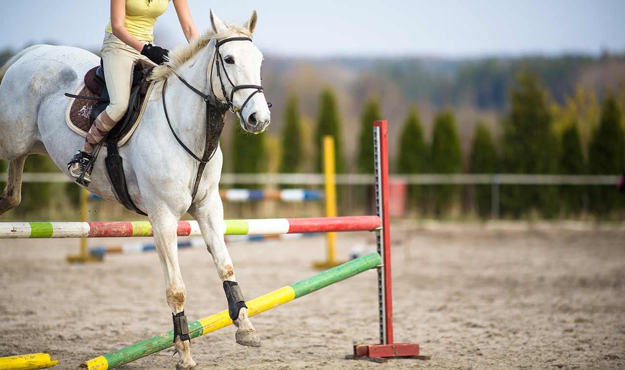 equestrian jumping poles