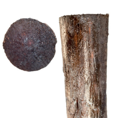 Creosoted Posts